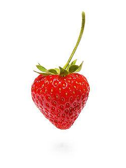 250px-Strawberry444 dans La Rubrique D'Un Chat Cultivé